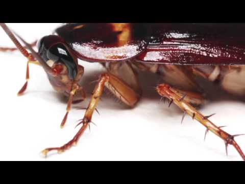 Cockroaches vs  Other Pests (Easily See The Differences
