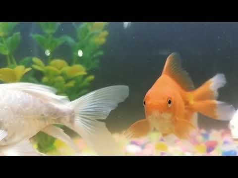 Fish Slow Motion Movements