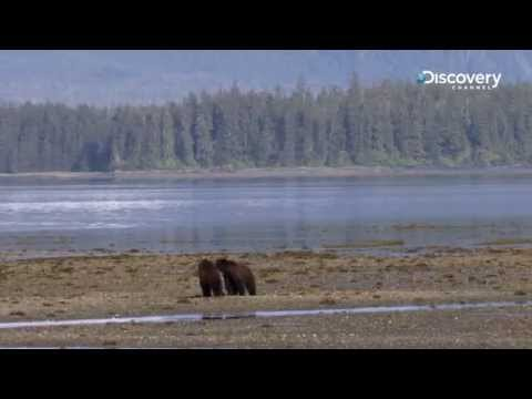 Grizzly Island | Mystery Of The Lost Islands