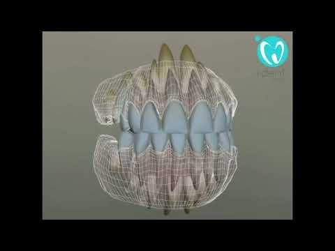Схема прорезывания зубов у детей: последовательность