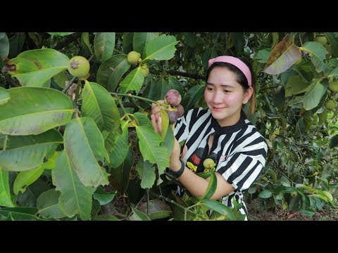 Yummy Mangosteen – Mangosteen Picking At Farm – Cooking With Sros