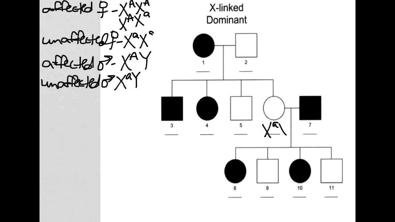 X Linked Dominant Pedigree Youtube