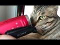 【革命!】新しいビデオカメラが来たので猫と紹介してみた!【CX680】