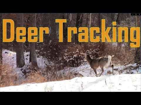 Deer Tracking & Hunting The Catskill Mountains