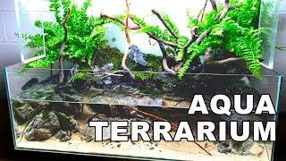 INCREDIBLE AquaTerrarium AQUASCAPE || HOW TO: No Ferts, No Heater, No co2