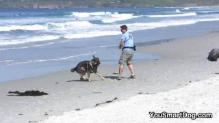 Dog Training: Your Dog's Recall...  Rocket Or Rowboat? - Part 2 In High-definition