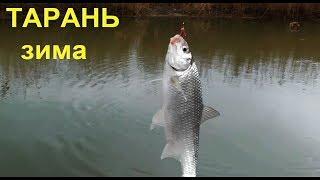 ловля Тарани зимой на Кубани в проводку и на донку. Рыбалка, хутор Труд, Садки Fishing cu c