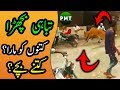 Out of Control Bull RUNS Away After Hitting A Men at FB Area Block 15 | Bakra Eid 2018 Special Video