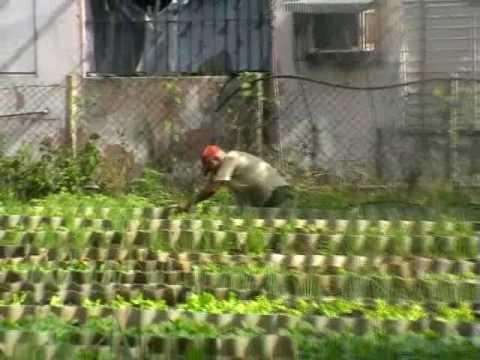 Urban Agriculture in Havana