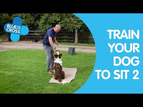 How To Train Your Dog To Sit Part 2 | Dog Trainings Tips | Blue Cross