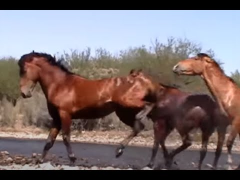 Wild Horse Action at the Salt River by Karen McLain