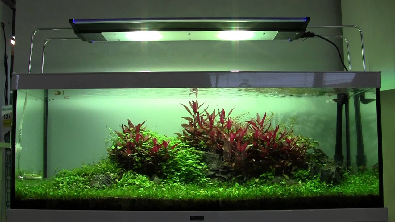 Private landscape aquarium 78 days after inicial setup Aquarium landscape