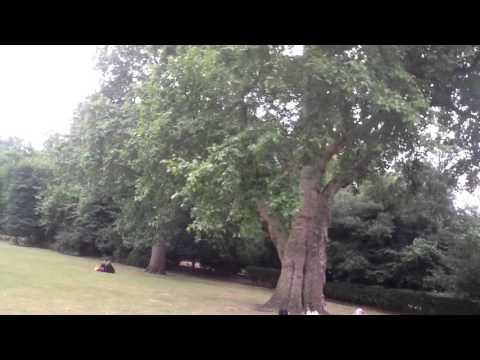 Lincoln's Inn Fields, London - Video 1