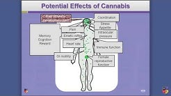 What Does Cannabis Do? The Endocannabinoid System