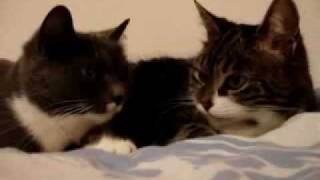 Video Two Cats Talking To Each Other (Original!) download MP3, 3GP, MP4, WEBM, AVI, FLV Oktober 2017