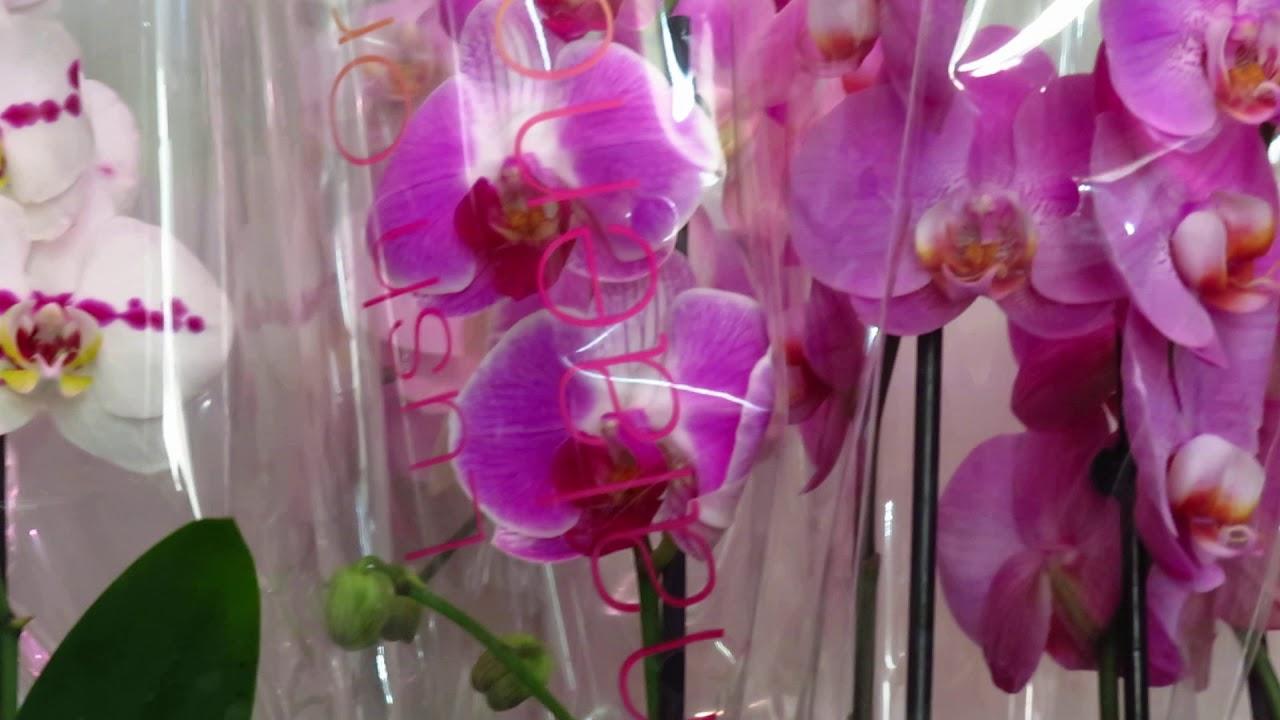 Шикарнейший завоз орхидей от 6.07.2020г.Много эксклюзива!!!!!!!
