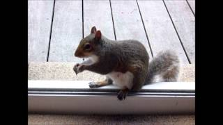 Funny choking squirrel