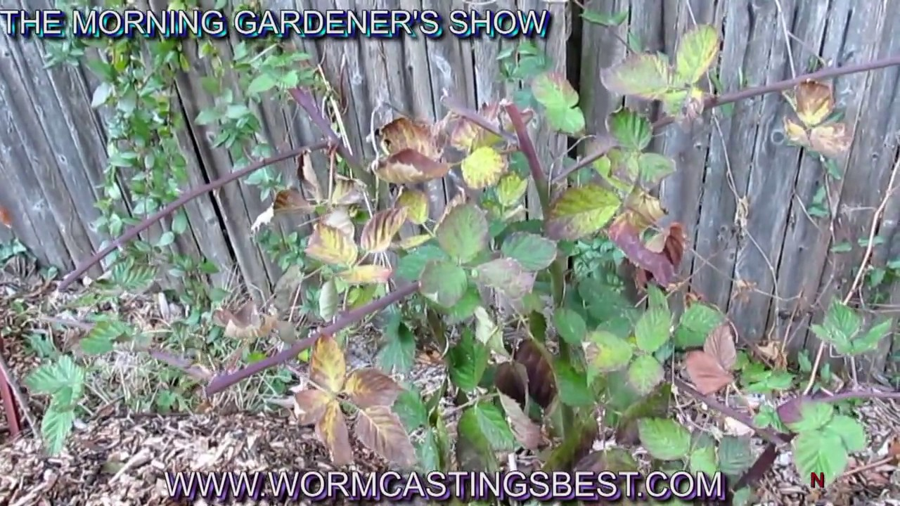 Simplest Way To Turn Clay Soil Into Black Gold Funnydog Tv