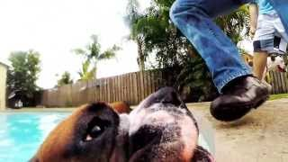 Silly Boxer Dog Takes My Camera And Swims Away! Wow! Best Video Ever!!! Gopro