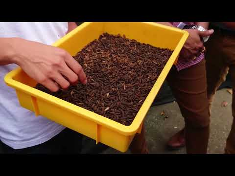 Urban farming: Sustainable Singapore