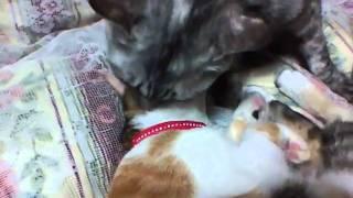 2010.10.22撮影。ルナとマイコは普段あまり仲良くありません。たまにこ...