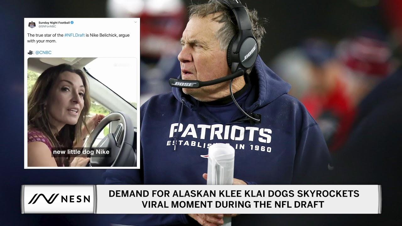 Demand for Alaskan Klee Klai Dogs Skyrockets Bill Belichick's Dog Goes Viral On NFL Draft Night