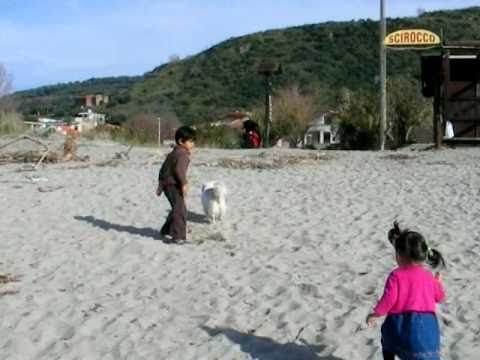 Ascea Marina, Salerno Province, Italy | kids & dog playing at the beach