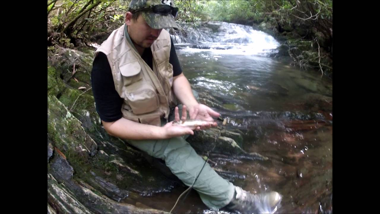 Fly Fishing For Wild Brook Trout In Bell County In