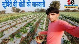 Strawberry farming /स्ट्रॉबेरी की खेती की पूरी जानकारी