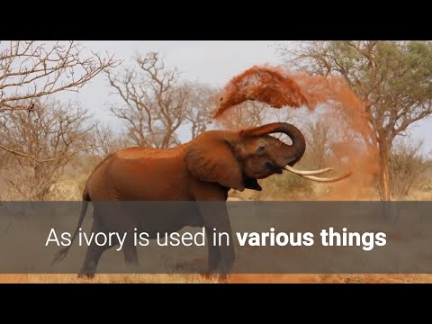 how to clean the ivory