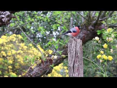 Bird sound with Meditation || Free Background Video & Music For You tube No Copyright ||