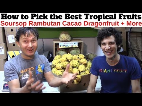 How to Pick the Best Soursop, Cacao, Rambutan & Other Tropical Fruits