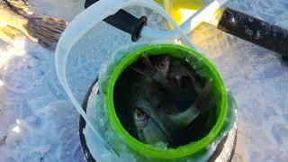 Рибалка в Караганді підсумок риболовлі!!!