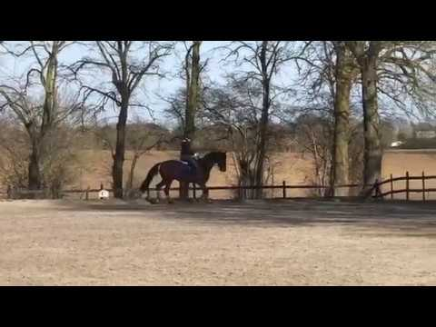 Jayne and Hyperion training session