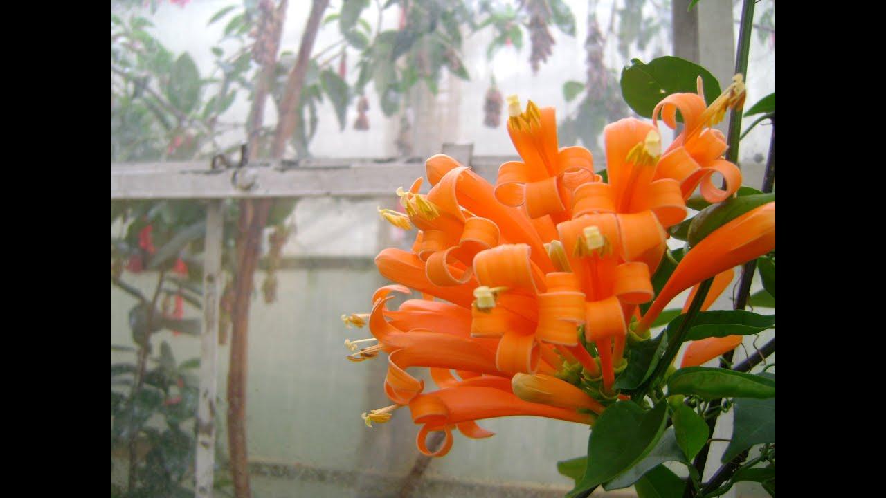 Jardin Botanico Jose Celestino Mutis Bogota Colombia - YouTube