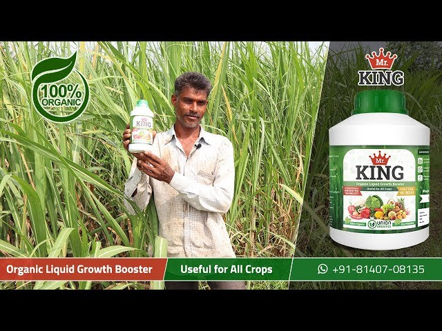 Mr. King – 100% Organic Liquid Growth Booster - Extremely Beneficial for Sugar Cane