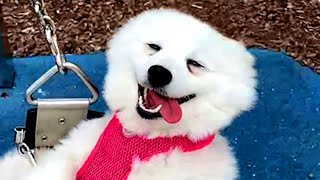 BEST DOGS OF 2021 SO FAR PT.1 | Funny Pet Videos