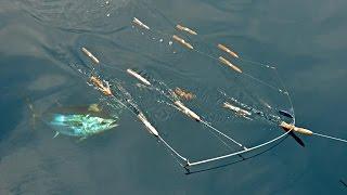 Bluefin Tuna Fishing at The Claw with SI Flexi-Bar Squid Bars