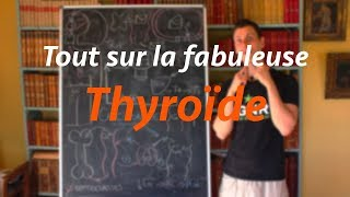 Tout savoir sur la thyroïde - système endocrinien 02