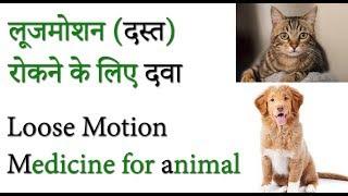 Cat Loose motion medicine in hindi | Dog Loose motion medicine | Animal Loose motion medicine