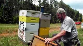 BEEPOLLEN TRAP BEEHIVE Basics Bee Pollen Trapping Honeybee Beekeeping Beekeeper John Pluta Video GA.