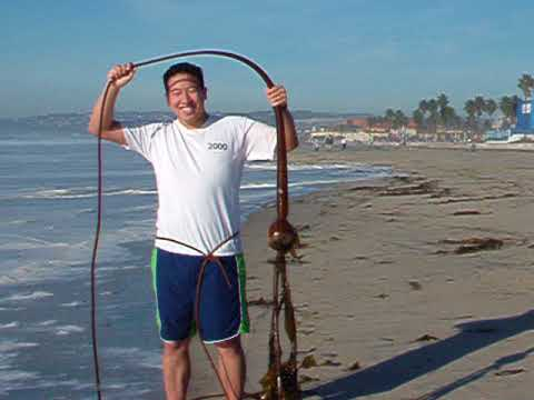 TheChanClan: San Diego Mission Beach Kelp - December 2005