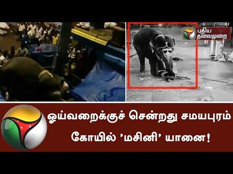 ஓய்வறைக்குச் சென்றது சமயபுரம் கோயில் 'மசினி' யானை! | #Elephant #Trichy #Samayapuram #Temple