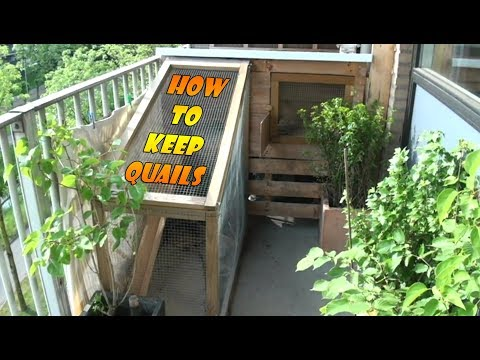 Keeping and raising quails part 1, how to build a quail cage
