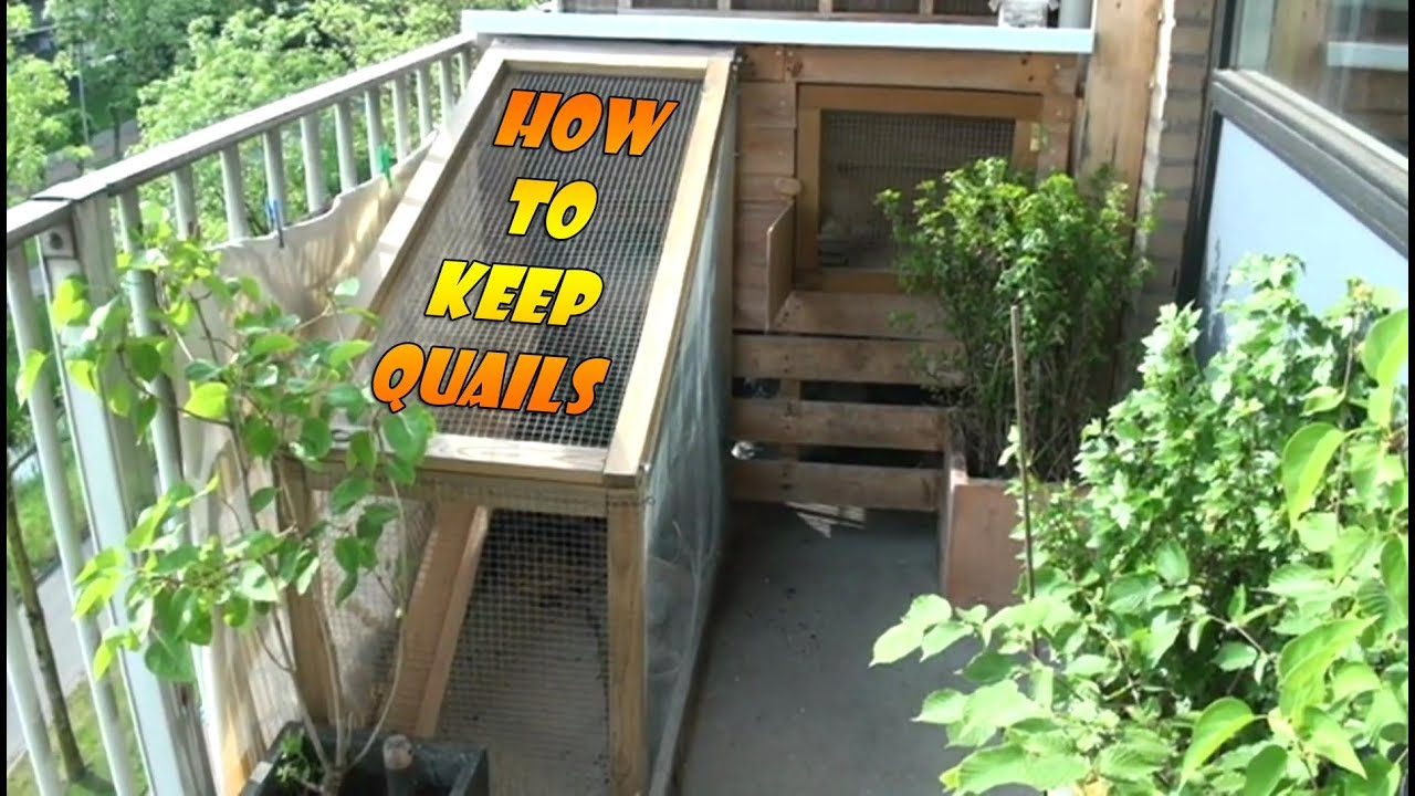 Keeping And Raising Quails Part 1 How To Build A Quail