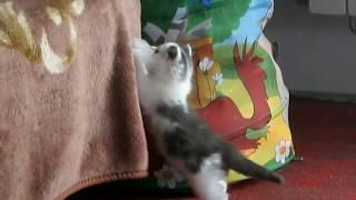 Котенок 1,5 месяца