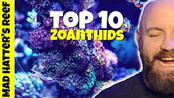 Top 10 Zoanthids for a Reef Tank