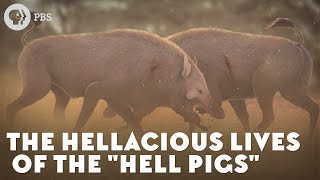 The Hellacious Lives of the Hell Pigs
