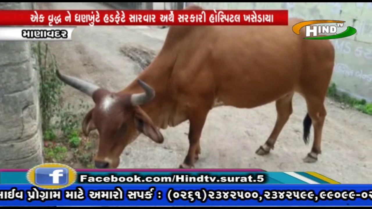 HIND TV NEWS MANAVADAR RAKHDATI GAYO 24 -JUNE- 2017