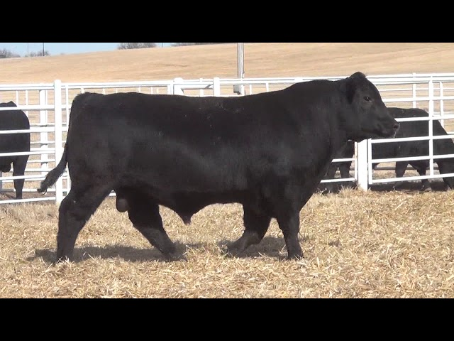 Express Ranches Lot 396